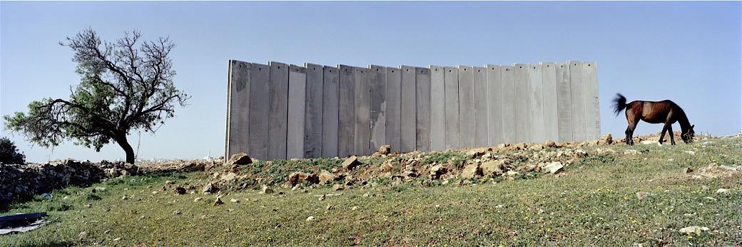 51_0698IL_Tree_wall_horse